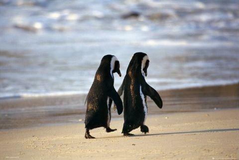 animals-cute-friends-penguins-favim-com-491670