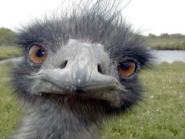 Very-Funny-Animal-Faces-13