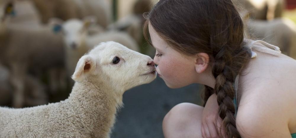 child_sheep_lamb_kissing_affection_feeling_animal_love_mood_1280x600