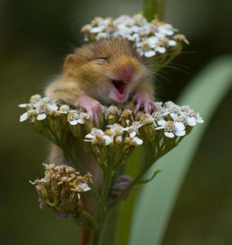 Funny-Animals-Smell-The-Flowers-Or-Eat-Them-5-455x480