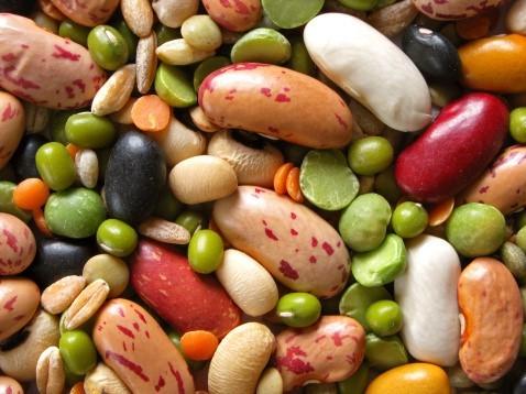 bean-variety