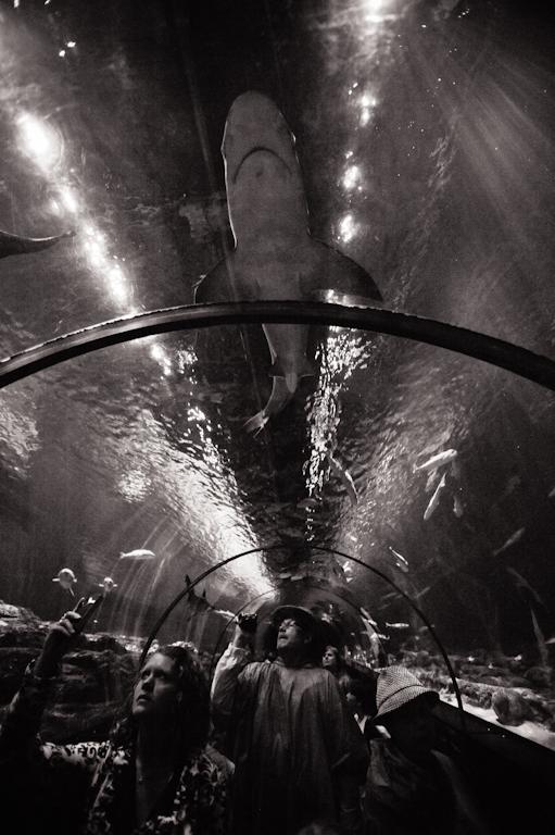 SeaWorld2011-1561-2 (2)