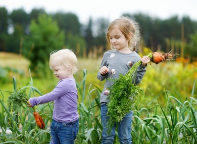 vegan-diet-children-poll-2-390x285